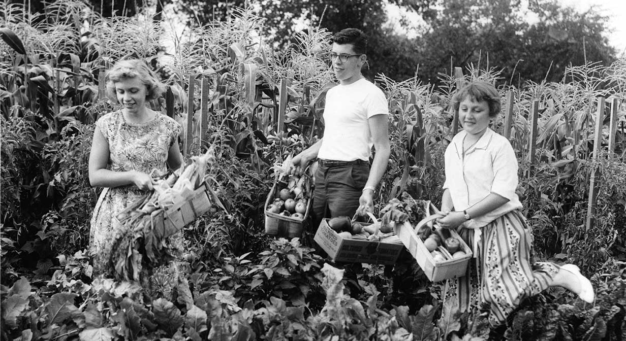 Harvest time at the Miles School Tract Garden, 1959.