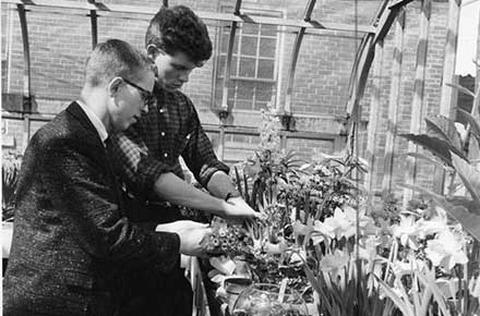 Instructor Peter Wotowiec works on plants with a student at West Technical High School greenhouse, 1963