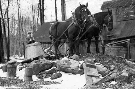 Harvested maple syrup being drawn by horses back to a boiling house near Chardon, Ohio