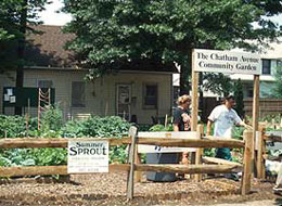 Chatham Avenue Community Garden, Summer Sprout Gardening Program