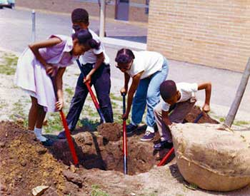 Four students dig a hole for a tree planting at school