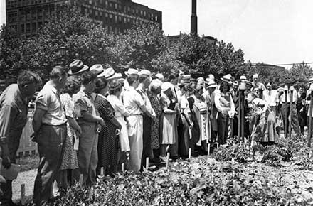 Mrs. Bee Taylor in the Mall Victory Garden in downtown Cleveland, ca. 1940s